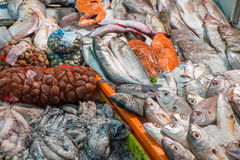 Fresh seafood and fish Royalty Free Stock Photo
