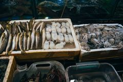 Fresh seafood from fish, squid, eels on the counter shop in Asia. For a healthy diet Stock Image