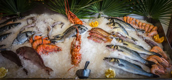 Fresh seafood and fishes lying on ice in the shwcase. Royalty Free Stock Images