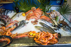 Fresh seafood and fishes lying on ice in the shwcase. Rethymno on Crete island, Greece Royalty Free Stock Photography