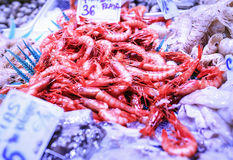 Fresh seafood in a food market of Barcelona.  Royalty Free Stock Image