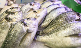 Fresh seafood in a food market of Barcelona Stock Photography
