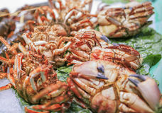 Fresh seafood in a food market of Barcelona.  Stock Image