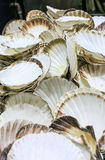 Fresh seafood in a food market of Barcelona. Fresh vieiras  in a food market of Barcelona Royalty Free Stock Photo