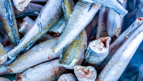 Fresh seafood. Fresh fish in the market Royalty Free Stock Photos