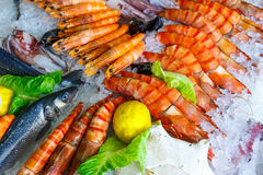 Fresh seafood in the fridge Stock Photos