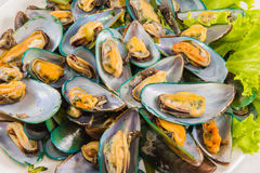 Fresh seafood green mussels Stock Photo