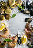 Fresh seafood with herbs and lemon on ice. Prawns, fish, mussels, scallops over steel metal background. Top view, copy Royalty Free Stock Photography