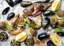 Fresh seafood with herbs and lemon on ice. Prawns, fish, mussels, scallops over steel metal tray Royalty Free Stock Photos