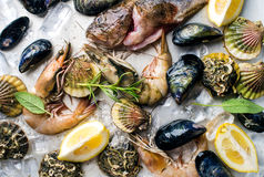 Fresh seafood with herbs and lemon on ice. Prawns, fish, mussels, scallops over steel metal tray Royalty Free Stock Image