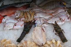 Fresh seafood are on ice Royalty Free Stock Photo