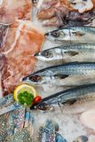 Fresh seafood on  ice, close-up.  Royalty Free Stock Photo