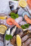 Fresh seafood on ice Stock Photo