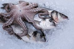 Fresh seafood on ice Stock Photos