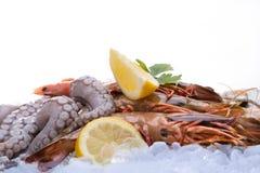 Fresh seafood on ice. Close-up Stock Photos