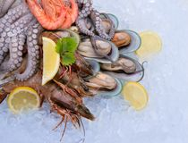 Fresh seafood on ice. Close-up Royalty Free Stock Photo
