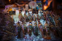 Fresh seafood on ice at the fish market. Seafood on ice at the fish market Stock Photos