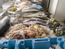 Fresh seafood on ice at the fish market Stock Image
