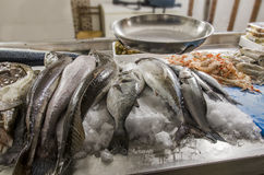 Fresh seafood on ice at the fish market Royalty Free Stock Photo
