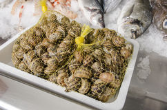Fresh seafood on ice at the fish market Royalty Free Stock Photography