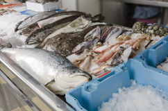 Fresh seafood on ice at the fish market.  Stock Photo