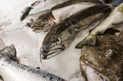 Fresh seafood on ice at the fish market.  Royalty Free Stock Image