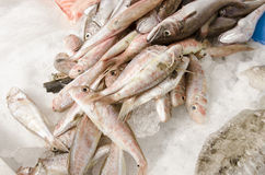 Fresh seafood on ice at the fish market Royalty Free Stock Photos