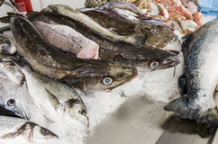 Fresh seafood on ice at the fish market Stock Images