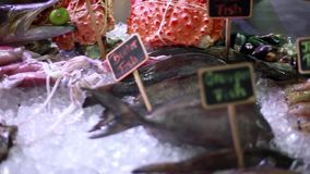 Fresh seafood on ice at the fish market with beautiful blurred bokeh lights. 1920x1080. Seafood on ice at the fish market stock video