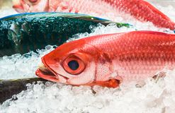 Fresh seafood on ice at the fish market stock photo