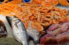 Fresh seafood on ice in fish market. In Barcelona, Spain Royalty Free Stock Photo