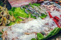 Fresh seafood on ice at the fish market. Close view Royalty Free Stock Image