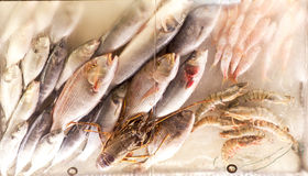 Fresh seafood on ice in the showcase Stock Images
