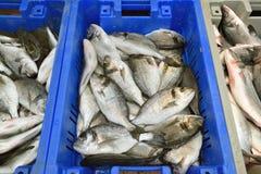 Fresh seafood Market Stock Photography