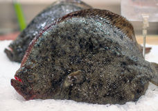 Fresh seafood: Mediterranean halibut at market Stock Photos