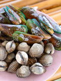 Fresh seafood mussels Stock Photography