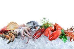 Free Fresh Seafood On Crushed Ice Royalty Free Stock Image - 87884616