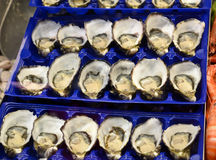Fresh seafood oysters being sold in victoria market Royalty Free Stock Photos