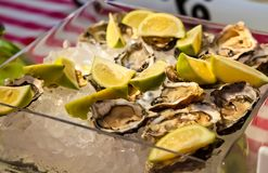 Fresh Seafood Oysters and Lemon on ice for catering. At Corporate gala dinner banquet event Stock Image