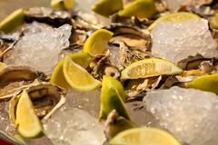 Fresh Seafood Oysters and Lemon on ice for catering. At Corporate gala dinner banquet event Royalty Free Stock Images