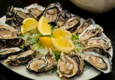 Fresh Seafood Oysters and Lemon on ice for catering. At Corporate gala dinner banquet event Stock Photography