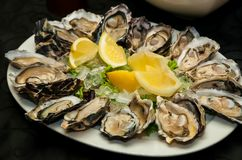 Fresh Seafood Oysters and Lemon on ice for catering. At Corporate gala dinner banquet event Stock Images
