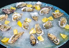 Fresh Seafood Oysters and Lemon on ice for catering. At Corporate gala dinner banquet event Royalty Free Stock Photos