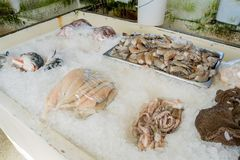 Fresh seafood in Pearson's Port. At Newport Beach, California royalty free stock image