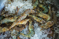 Fresh seafood photographed in vietnam fish market Royalty Free Stock Photography