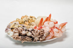 Fresh seafood on a plate. Great variety of fresh seafood lying on a plate Royalty Free Stock Photography