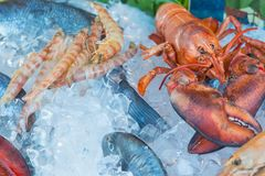 Fresh seafood red crawfish, shrimps, fish, calamary meat on ice at traditional seafood restaurant in Venice, Italy. Outdoor terrac. E Royalty Free Stock Photography