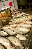 Fresh Seafood for Sale Royalty Free Stock Photography