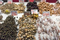 Fresh seafood for sale at a market in Madrid. Spain Royalty Free Stock Photo