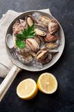 Fresh seafood. Scallops Stock Images
